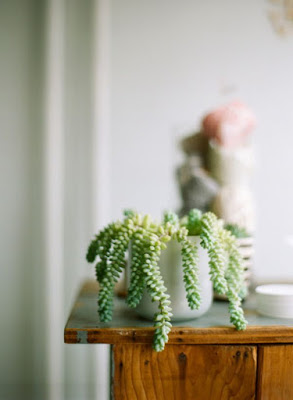 10 Succulent Plants for the Home