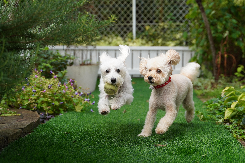 dogs playing in back yard homeownership john houston custom homes